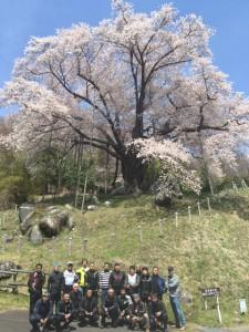 2越代の桜